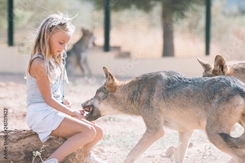 Spoed Fotobehang Kangoeroe Little girl giving food to the wolf