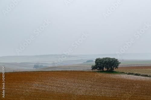 Fotografiet  Paisaje ondulado con tierras de cultivo y encinas, nevando