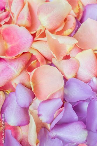 Spoed Foto op Canvas Frangipani Pink and purple rose petals; floral background