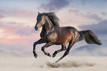 Bay Horse Run Gallop In Desert...