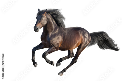 Fototapeta Bay stallion run gallop isolated on white obraz