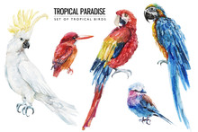 Watercolor Tropical Bird Illus...