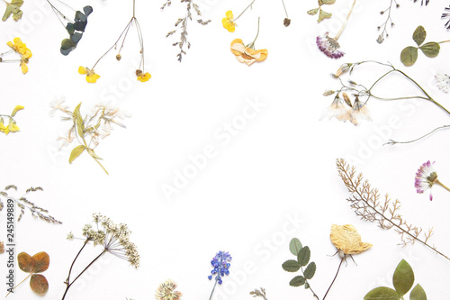 Various dried flowers and herbs on white  Flat lay  - Buy