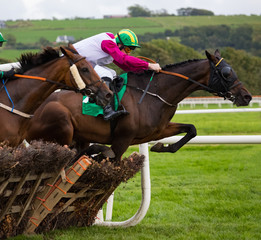 Race horse and jockey action jumping over a hurdle on the racetrack