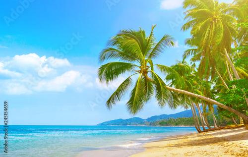Beautiful Beach View Of Nice Tropical Beach With Palms