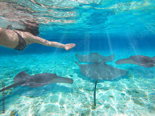 Fotografie, Obraz Girl snorkeling scuba with sharks and manta ray over reef in underwater Paradise