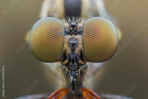 Türaufkleber Makrofotografie Extreme close up of robberfly macro photography