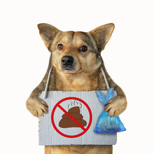 The Mongrel Dog With A Plastic Bag And A Poster No Dog Pooping Hanging Around Its Neck. Isolated. White Background.