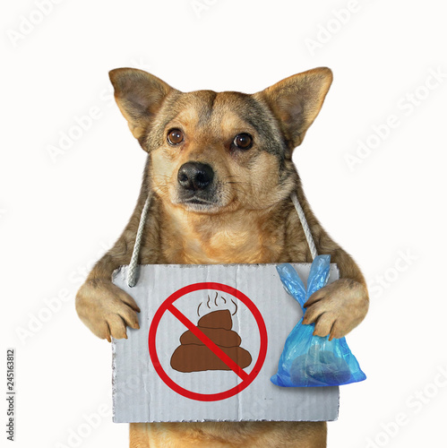 Foto  The mongrel dog with a plastic bag and a poster no dog pooping hanging around its neck