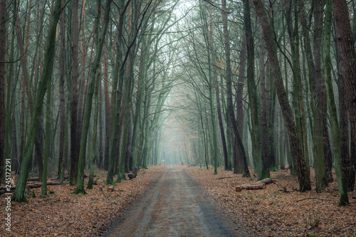 Road in Kabacki forest, Masovia, Poland