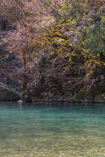 Trees Overhang River