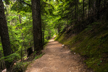 Deserted Trail Through A Mountain Forest On A Summer Day