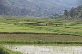 Fototapeta Sawanna - wielka równina afrykańska serengeti w bujnej zieleni po porze deszczowej