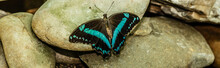 Butterfly Resting On The Rock