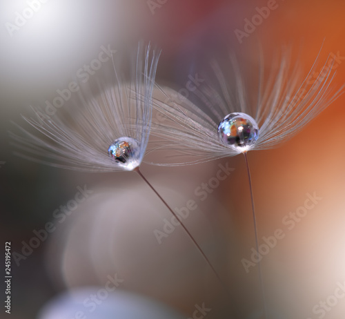 Beautiful macro shot of magic flowers. Border art design. Magic light.Extreme close up macro photography.Conceptual abstract image.Orange Background.Fantasy Art.Creative Wallpaper.Dandelions.