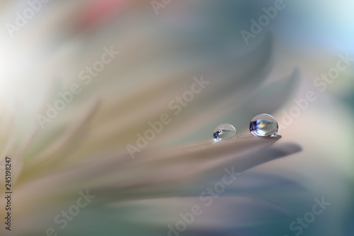 Beautiful spring nature blossom web banner or header. Blurred space for your text.Colorful Artistic Background.Conceptual abstract image.Beautiful nature with white flowers.Floral Fantasy Design.
