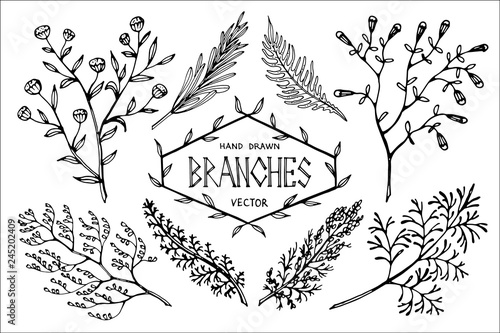 Fotografia  Hand drawn vector branches.
