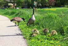 Midwest Springtime Wildlife Na...