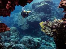 Male Scuba Diver Swimming In Red Sea