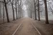 canvas print picture -  Parklandschaft in Leipzig im Winter mit frostigen nebeligen Wetter vereisten Bäumen