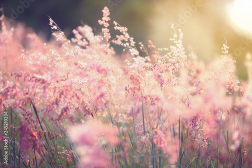 Vintage photo of flowers grass blurred on sunset, spring or summer concept - 245210204