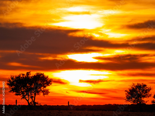 Poster Afrique du Sud Romantic orange sky at the sunset in a cloudy day in the dehesa and tree silhouette