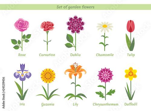 Fotografia Set of named garden flowers