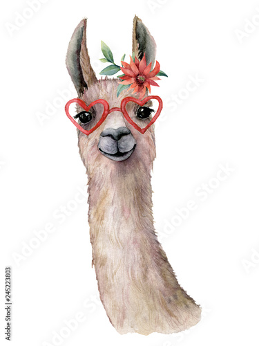 Watercolor card with llama, flower and sunglasses. Hand painted beautiful illustration with animal, red flower and sunglasses isolated on white background. For design, print, fabric or background.
