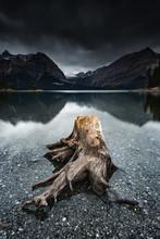 Tree Stumps Along The Shore Of Upper Kananaskis Lake