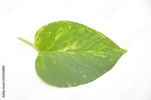 Foto  foglia verde di pianta flora botanica natura
