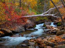 Autumn Colors Along The River