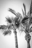 palmy o charakterze na tle basenu morskiego - 245234089