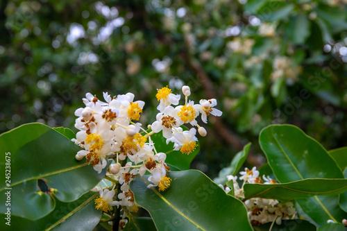 Fototapeta  Tropic greenery blooming