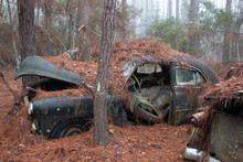 Rusty Old Car With Door Missing And Hood Open In Woods With Pine Needles