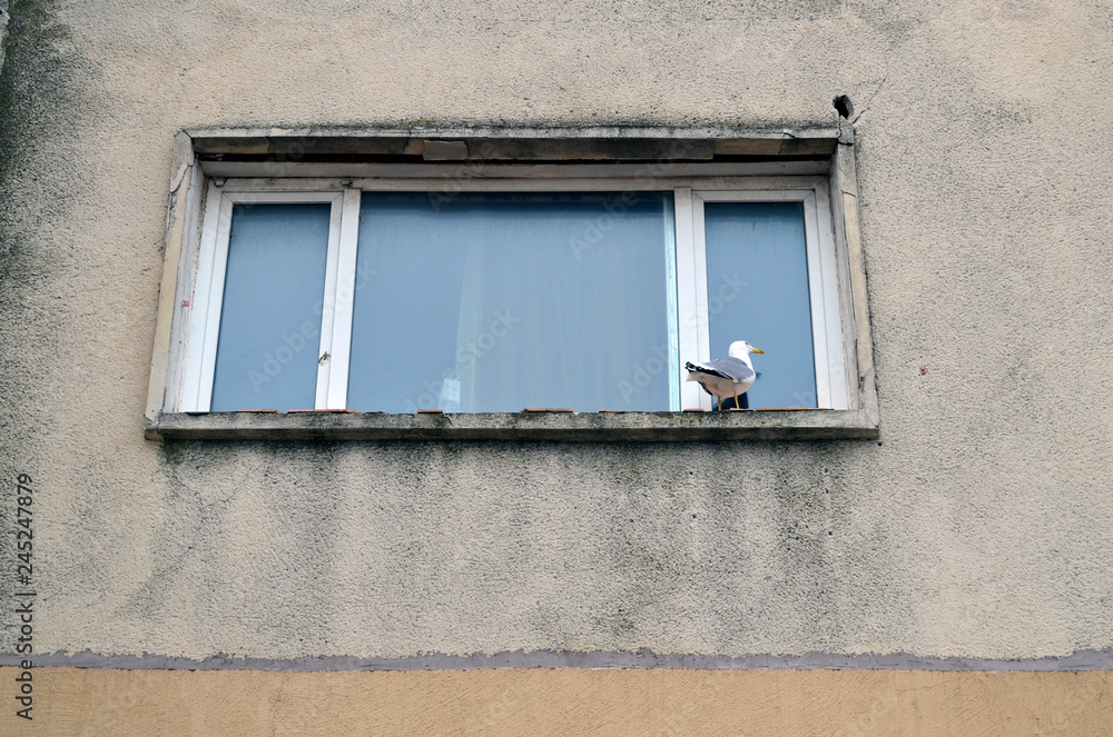 Seagull waiting at the window of an old building in Eastern Europe - a concept for hope and environment