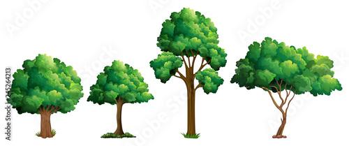 Set of different tree design Fotobehang