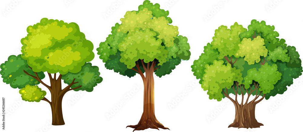 Fototapeta Set of different tree design