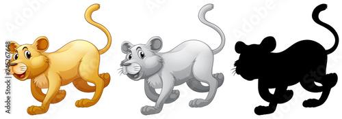 Staande foto Kids Set of female lion