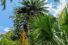 Royal Botanic Garden, Sydney, 2019