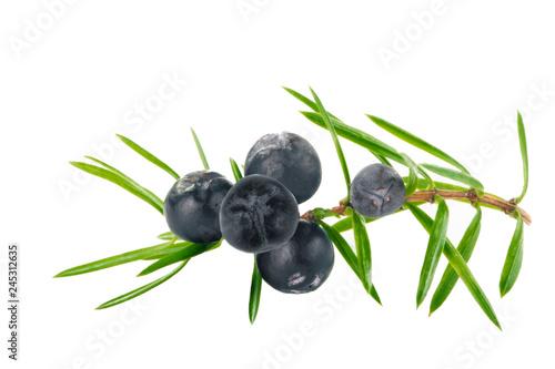 Fototapeta branch with black juniper berries isolated obraz