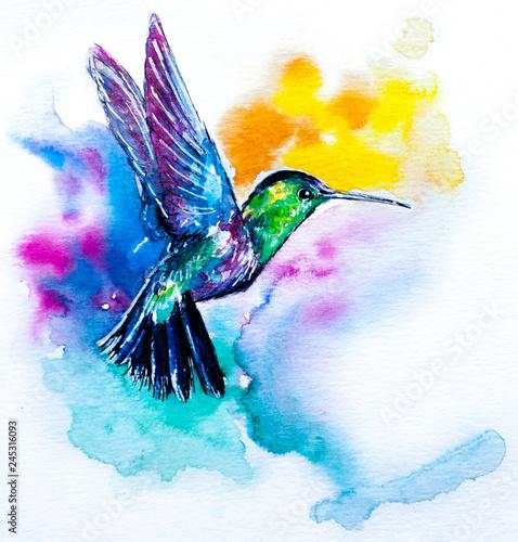 Fotografie, Obraz  Hummingbird illustration