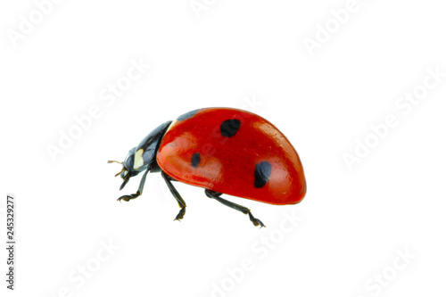 Photo red ladybird isolated on white background