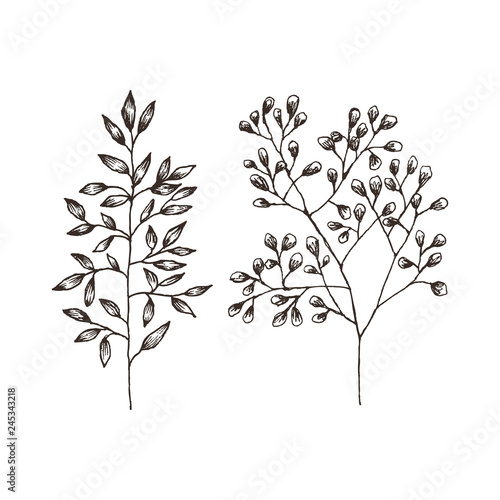 Fototapety, obrazy: Wild and herbs plants set. Botanical hand drawn sketch. Spring flowers. Vector design. Can use for greeting cards, wedding invitations, patterns.