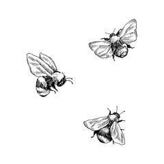 Set bumbara. Ručno nacrtana vektorska ilustracija. Vektorski crtež medonosne pčele. Ručno nacrtana skica insekata izolirana na bijeloj. Ilustracije graviranja u stilu bumbara.