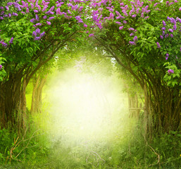 Fototapeta Las Fantasy background . Magic forest.Beautiful spring landscape.Lilac trees in blossom