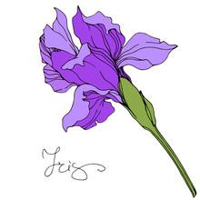 Vector Purple Iris Floral Bota...