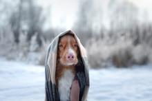 Cute Dog Portrait In A Scarf O...