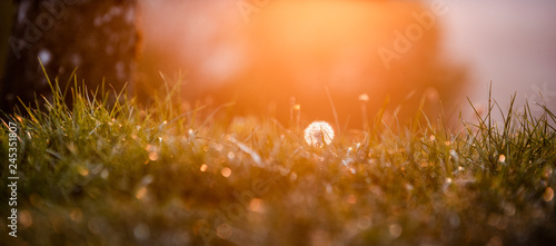 Fotografie, Obraz  paysage de campagne au coucher de soleil