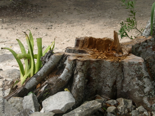 Poster Chamaleon Landschaft Tiere