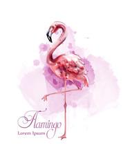 Flamingo In Watercolor Isolate...